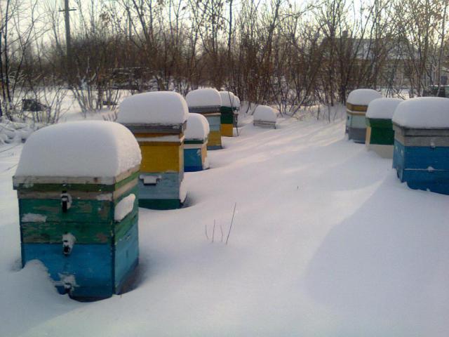 фото зима.JPG