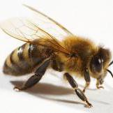 Union Beekeepers