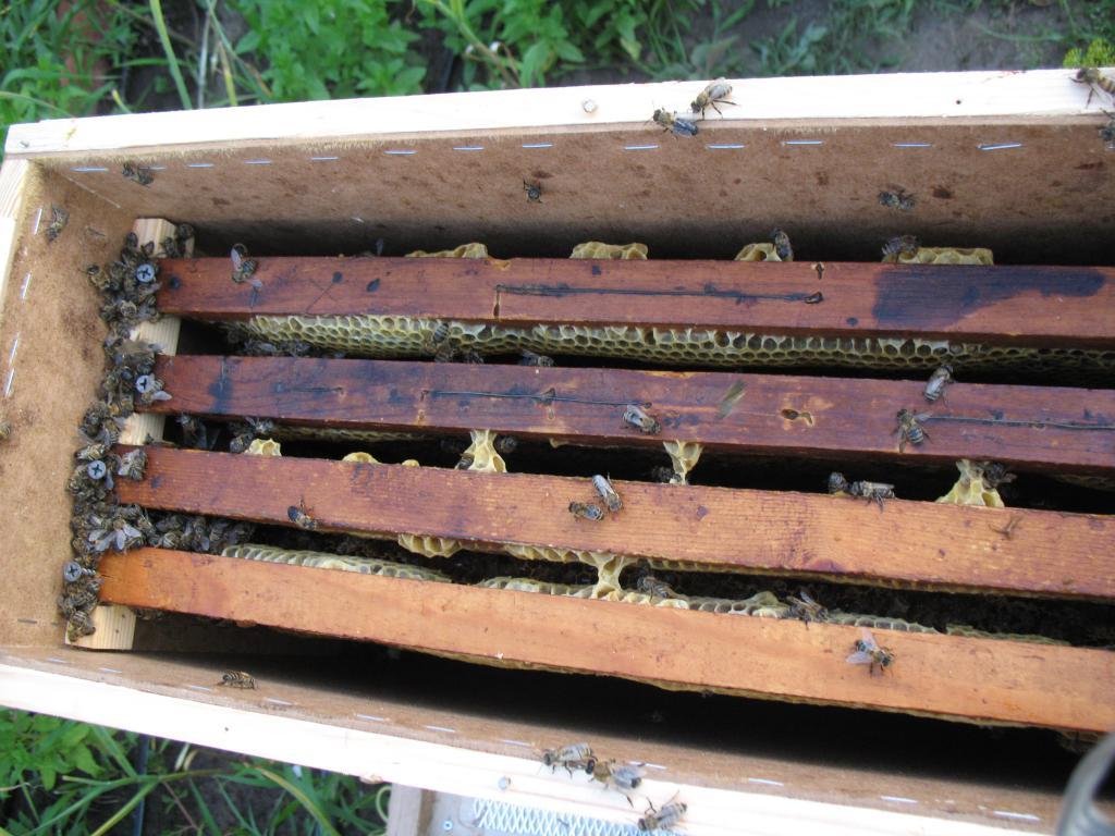 журнал пчеловодство 1997 2