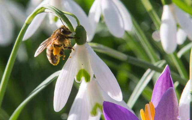 17-50-54-rannie-vesennie-cvety-kotorye-raspuskayutsya-iz-pod-snega-7.jpg