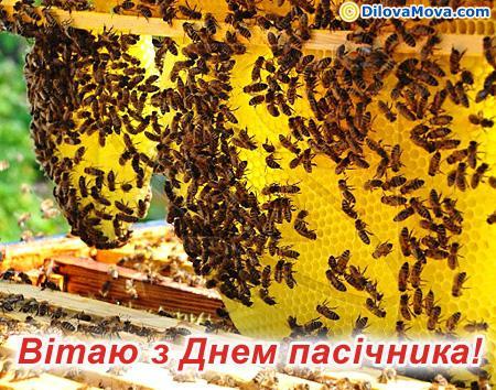 c_493_dmpu01c.jpg