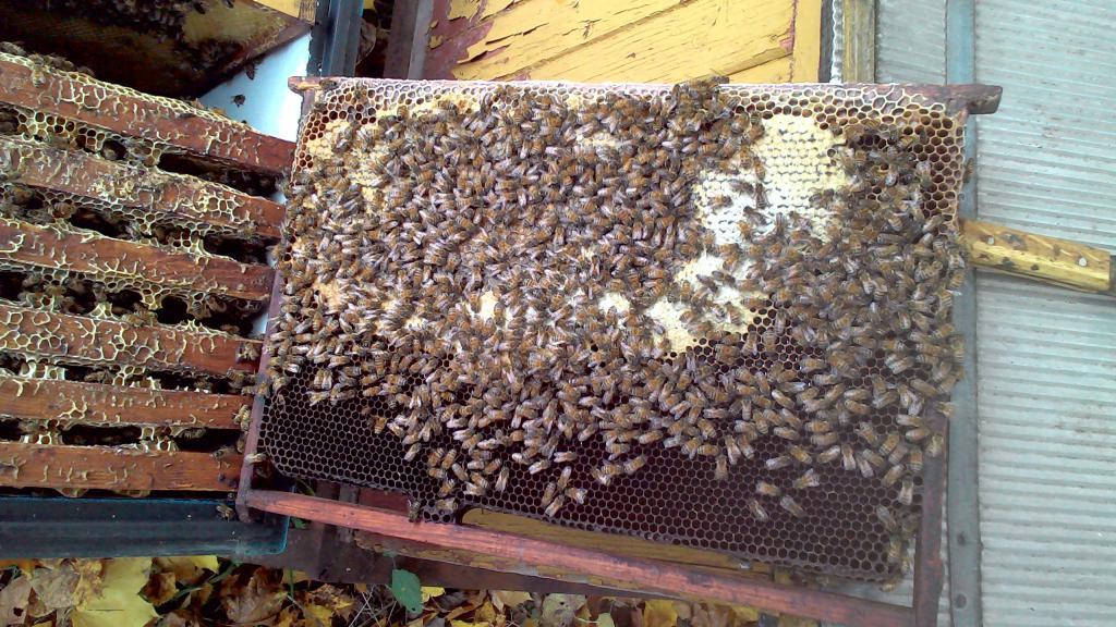 Как в августе сделать отводок пчел 117