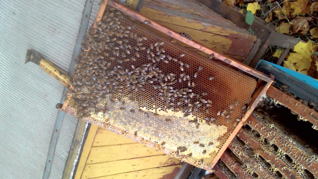 Как сделать матку для пчел 955