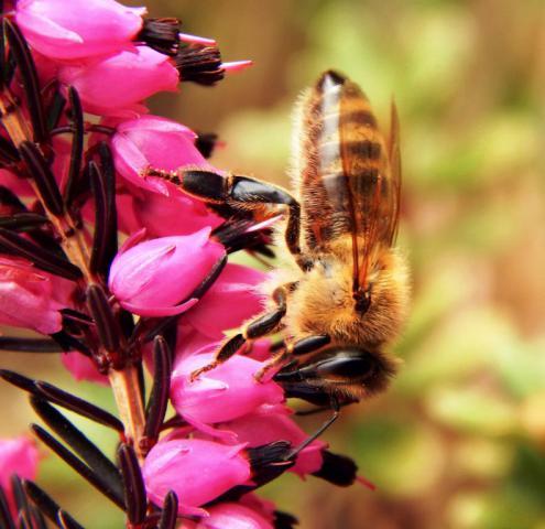 bee-macro-spring-nature-57451 - копия.jpeg