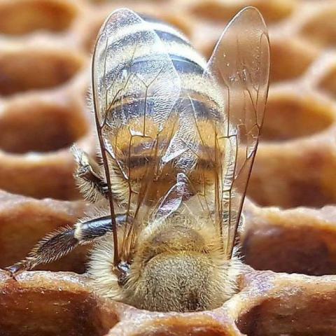 бджола в роботі.jpg