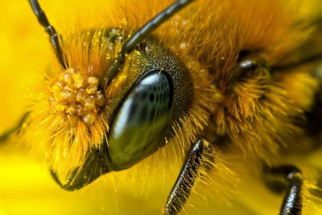 saveourbees-1024x683.jpg
