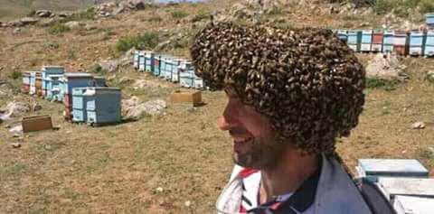 шапка.jpg