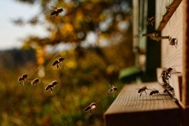 пчелі летят.jpg