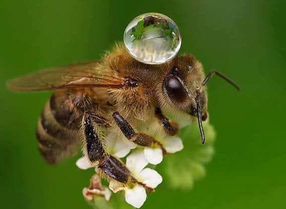 бджола 3.jpg