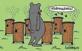 мишка.jpg