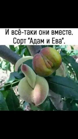 IMG-54559293ef111626e9ca576ae94e045c-V.jpg