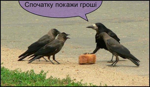 vorony-spochatku-groshi.jpg