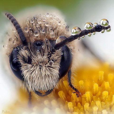 супербджола.jpg