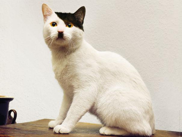 Кот по кличке Гитлер.jpg
