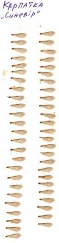 1200 Крылья - карпатка Синевир.jpg
