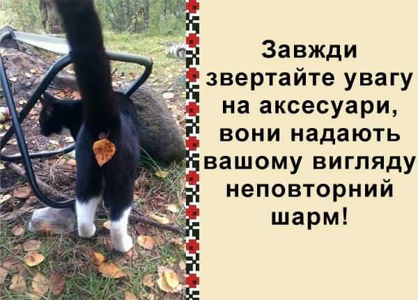 FB_IMG_1572280582319.jpg.17d51e8255956be4e72fd5ab51db3915.jpg