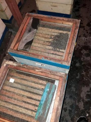 занёс пчёл  (8) (640x480).jpg