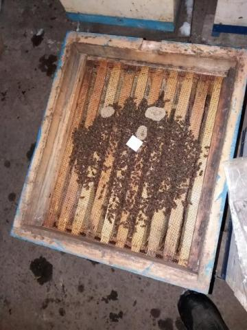 занёс пчёл  (9) (640x480).jpg