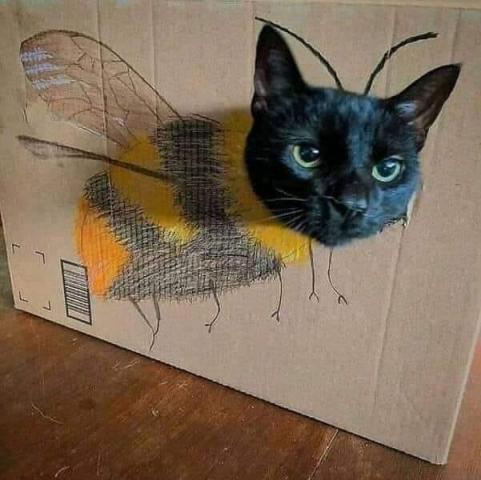 бджолокіт.jpg